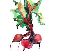 Watercolor image of beet root on white background.  by OlgaBerlet