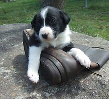Pup and boot 3 by BackTrack