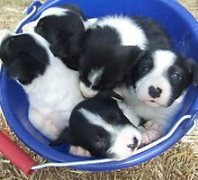 Pups in bucket by BackTrack