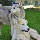 Husky & Daughter by Paul Revans