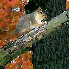 Squirrel Crossings by Linda Miller Gesualdo