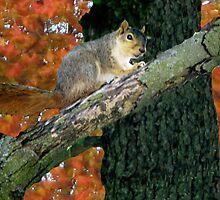 Squirrel Crossings by Linda Miller Gesualdo