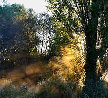 Dawn Light by Lea Valley Photographic