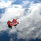 red leaf floating by nordvil