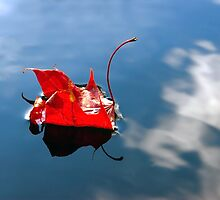 red leaf, which dreamed to be a swan by nordvil