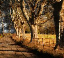 Guardians Along Your Way by Nigel Finn