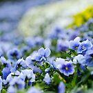 Spring flowers by Pirostitch