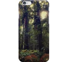 Sunrays in the Redwoods iPhone Case/Skin