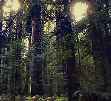 Sunrays in the Redwoods by AmyJSmithLA