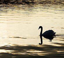 Swan Silhouette on Water in Sunset by Nikolaj Masnikov