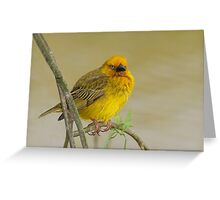 All Shook Up!! Greeting Card