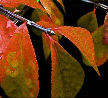 Snippet of Fall by RC deWinter
