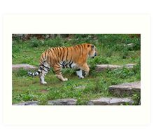 You Know You Love Tigers When.... Art Print