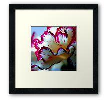 Anatomy Of A Flower II Framed Print