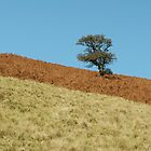 One tree hill by kirstyf