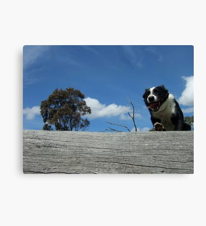 Zorro jumps log WS Canvas Print