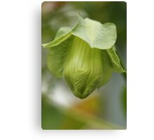 Cup-and-Saucer Flower Bud Canvas Print