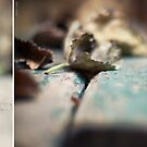 Leaves, Ants and Autumn by Jakov Cordina