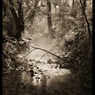 dark hollow by Jeff Rinehart