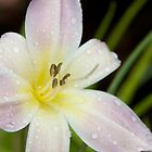 Just a flower by Phil Parkin