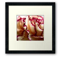 Anatomy Of A Flower III Framed Print