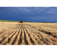 Harvested wheatfield Photographic Print