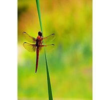 Dragonfly ~The  Beauty From With In Photographic Print