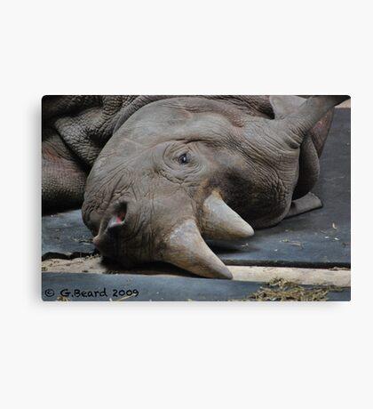 Sad Rhino Canvas Print
