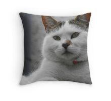 Kipling the Cat Throw Pillow