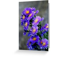 Asters Aglow Greeting Card