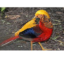 Bird Of Many Colors Photographic Print