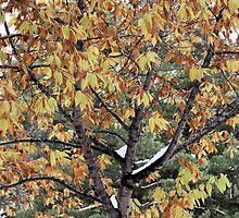 Fall on the Prairies by Jenn Shiels