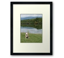 Rose At The Lake Framed Print
