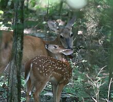 Mother deer by Camberleigh Myers