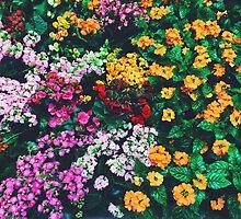 In Bloom by HawthroneArt