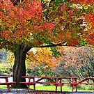 Autumn In Vermont by Deborah  Benoit