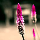 Purple Paintbrush by AngelPhotozzz