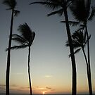 Coconuts at sunset by Greg Kolio Taylor