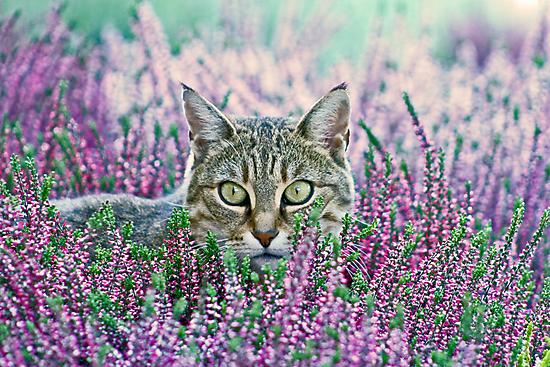 I spy... by Jeanne Horak-Druiff