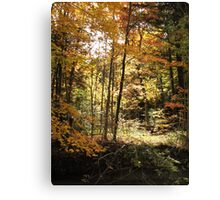 The crackling of leaves Canvas Print
