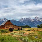 Moulton Cabin and Buffalos by Teresa Zieba