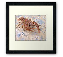 Crayfish Framed Print