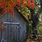 Shed by John Beamish