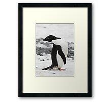 Adelie Penguin Framed Print