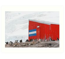 Gentoo colony at abandoned Argentine station Art Print
