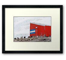 Gentoo colony at abandoned Argentine station Framed Print