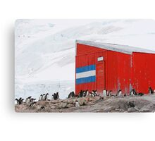 Gentoo colony at abandoned Argentine station Canvas Print