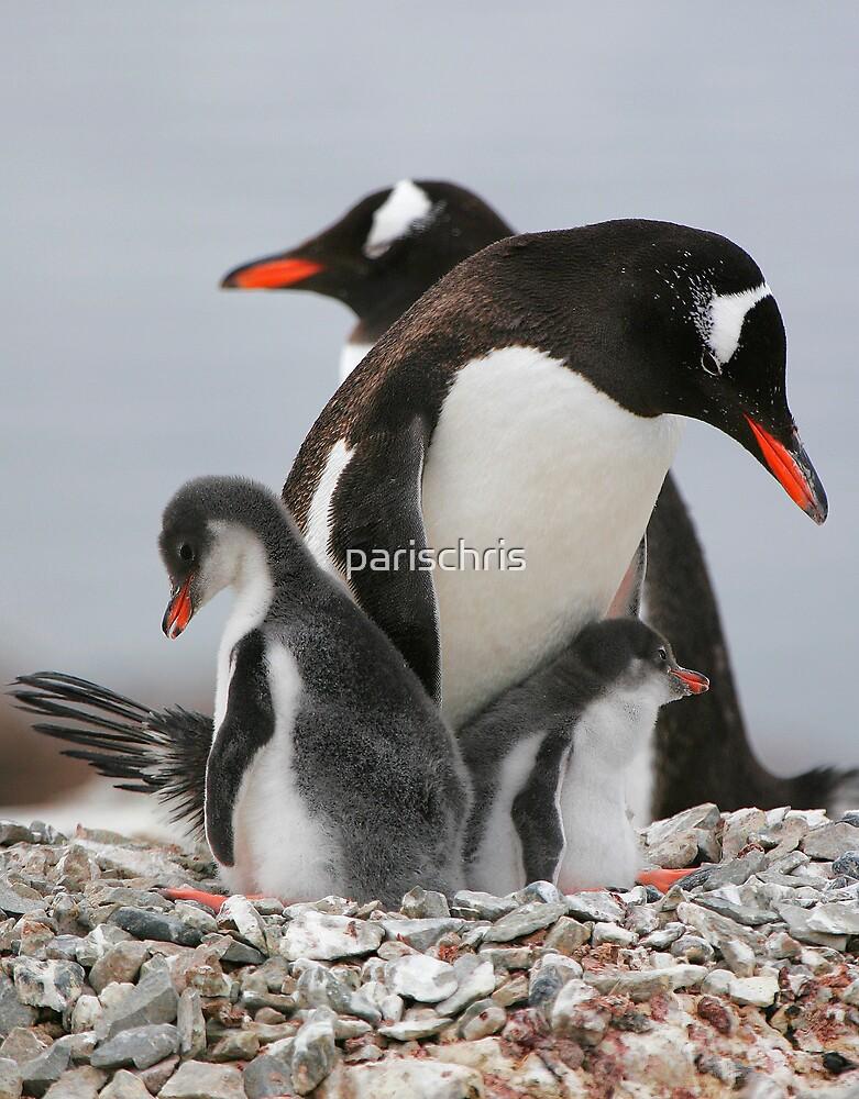 Gentoo with 2 healthy chicks by parischris