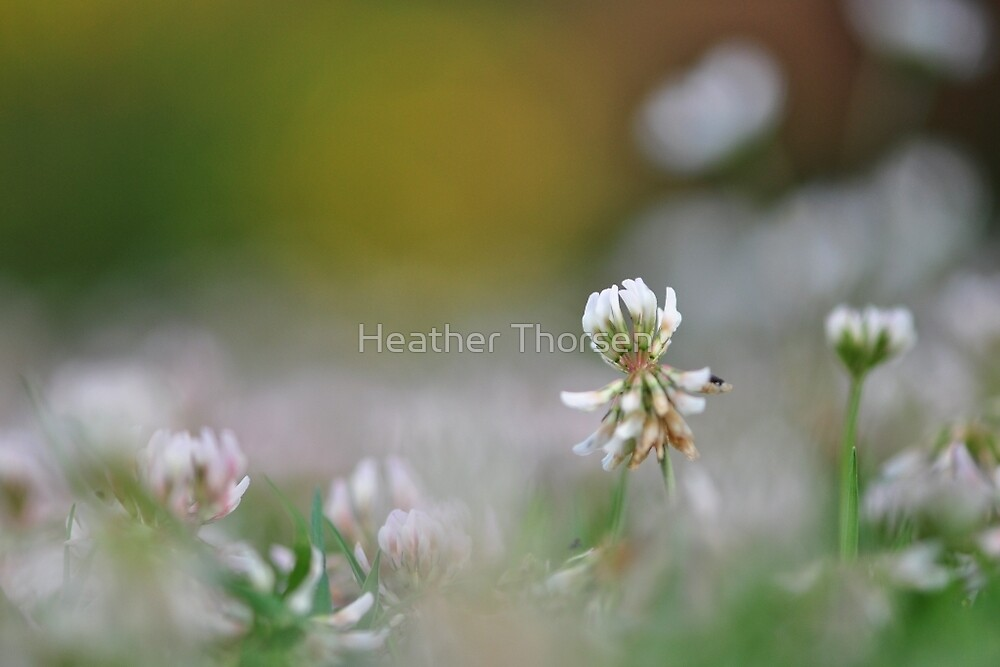 A miniature world by Heather Thorsen