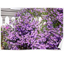 Flowers And Fence Poster